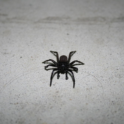 Little Black Spiders (ACTI Subground Bootleg)