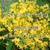 THINGYAN MOE REMIX (XXXL RECORDZ)