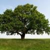 Tree (Game)