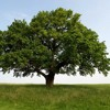 Tree (Game 2)