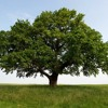 Tree (Game 4)