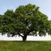 Tree (Game 3)