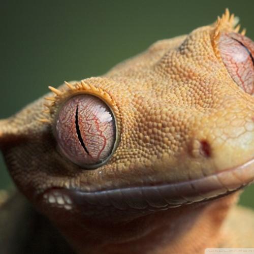Olivier Heldens - Gecko (Saltzer Edit)