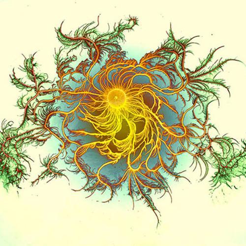 Alien Rainforest = New Roots (D.M.T Approved)