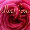 Oh Yellow Rose - Music, Lyrics, and Vocals by HolyMac007