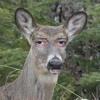 Krisanix - Oh Deer God