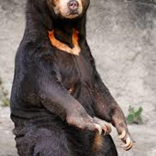 Do Bears Lay Eggs?