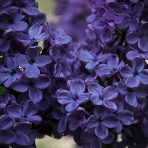 Natalie Jonathan & Eidos — Eternal Spring
