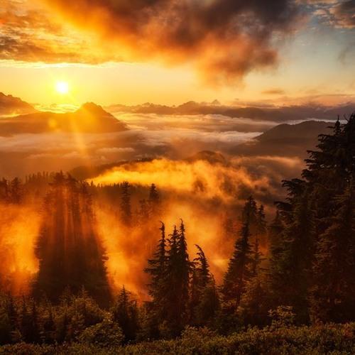 Morning Light [Free]