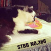 eleven16 - Pussy [STBB 366 / STBB366]