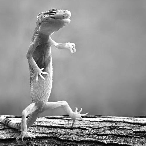 Spring Lizards Part 1