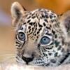 Jaguar & Halle Bopp (Mash up) @ 432Hz