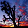 Peyote Songs - Adam David Begay, Paul Brown - San Fran, CA 2013