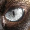 Blink Of An Eye (lyrics in description)