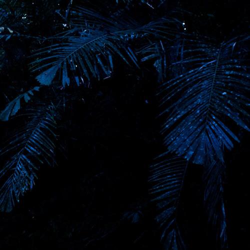Voices of the Night - Taman Negara, Malaysia