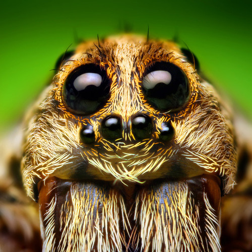 Mouth of a huntsman