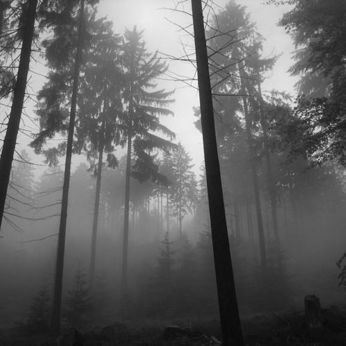 In The Trees - 1 Hour Set - Dj Michel Saad