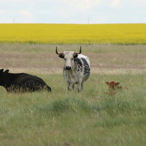 Grant Taillieu Discusses How To Turn A Ranch Around