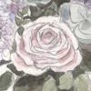 Suzanne - Leonard Cohen / Graeme Allright - Cover en Française