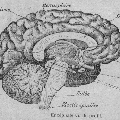 UE5: Aspects morphologiques et fonctionnels