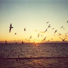Birds Of Summer (Black Space Remix)