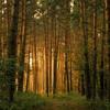 Basshoven & Reepz - Devils Forest (clip) mp3