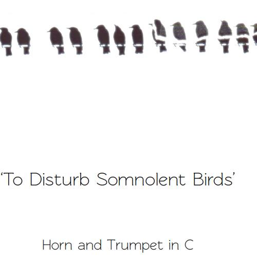 To Disturb Somnolent Birds