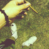 The Feel ft. Gringo/ Alex Nova