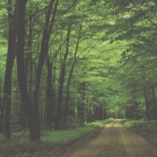 Baixar New Age - Ethno - Asian - Meditation - Reiki Music - Walking Through The Forest
