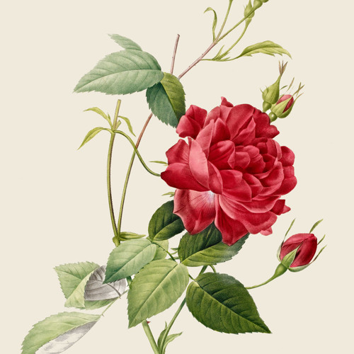 """""""Flowers In The Mix"""" 
