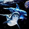 Guy Akimoto - STHWST VOL. 2 - 02 Dolphin Escapades