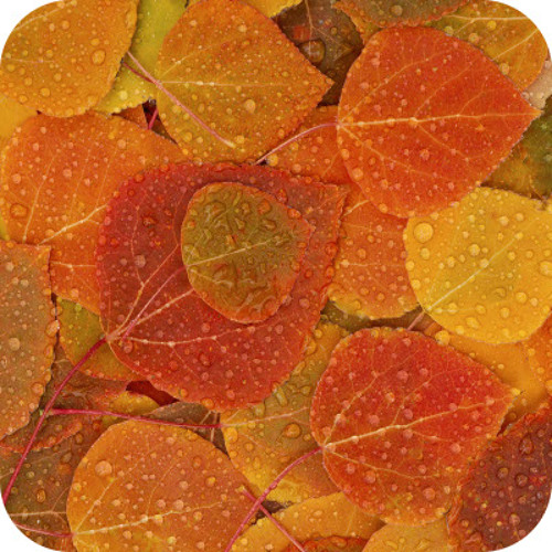 Fall house mix