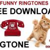Cat Meow FREE Ringtone