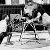 Fedde Le Grand - Don't Give The Lion (Julien Tenda & Lieder Mashup) [FREE DOWNLOAD]