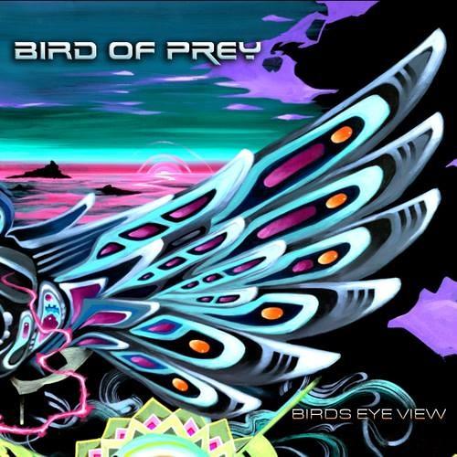 Bird Of Prey - Birds Eye View