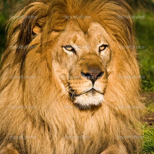 DzS -- Mefie Toi Du Lion Qui Dort >>>WAV DOWNLOAD<<< - Live impro-1PATTERN-07/04/14__-200Bpm-