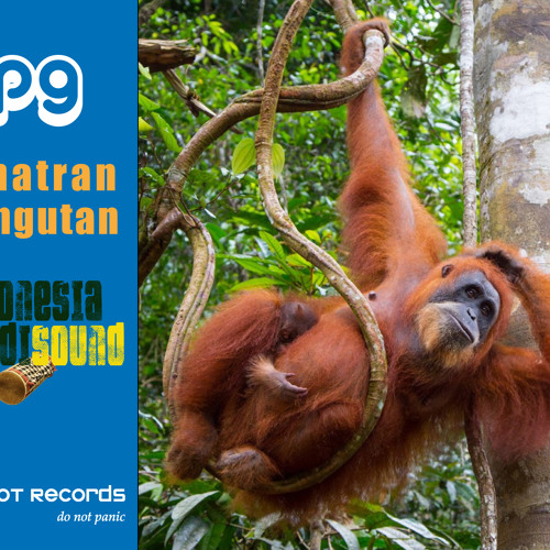 IOT - Indonesia Expedisound - Sumatran Orangutan by OP9