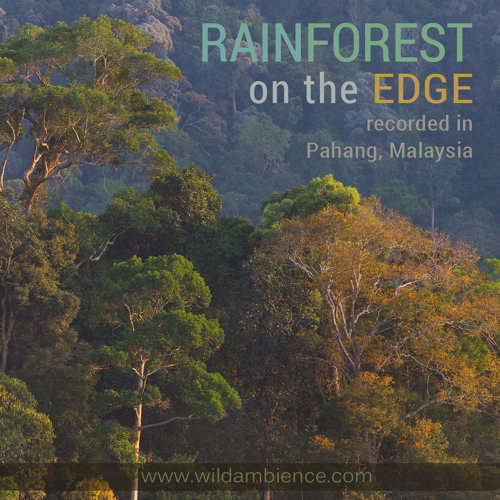 """Rainforest On The Edge"" 40 minute nature soundscape - Free Download"
