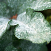 Did this miserable winter wipeout mildew and blight?