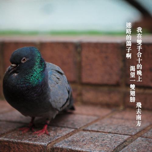 鴿子 (guitar, vocal & harmony)Cover by André