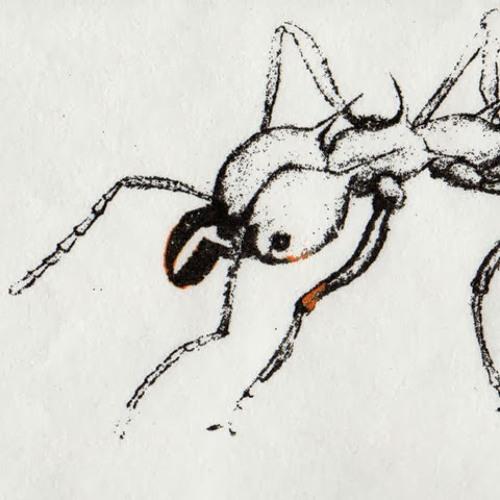 Ant Farm by Schwartz/Mulkerin/Kinsella