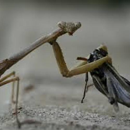 Mantis Hugs