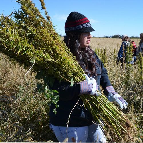 """Understanding hemp as a legal crop with """"Organic Cowboy,"""" Doug Fine"""