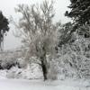 Carmel Farm In Winter
