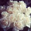 endless love - diana rose