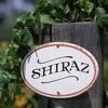 Shiraz music guitar موسيقى شيراز