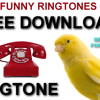 Canary Sings Ringtone FREE to download and use