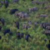 Free Download Tyler Hicks On Elephant Poaching Mp3