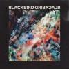 Blackbird Blackbird - Hold On