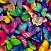 Butterflies - Kalohe Kai